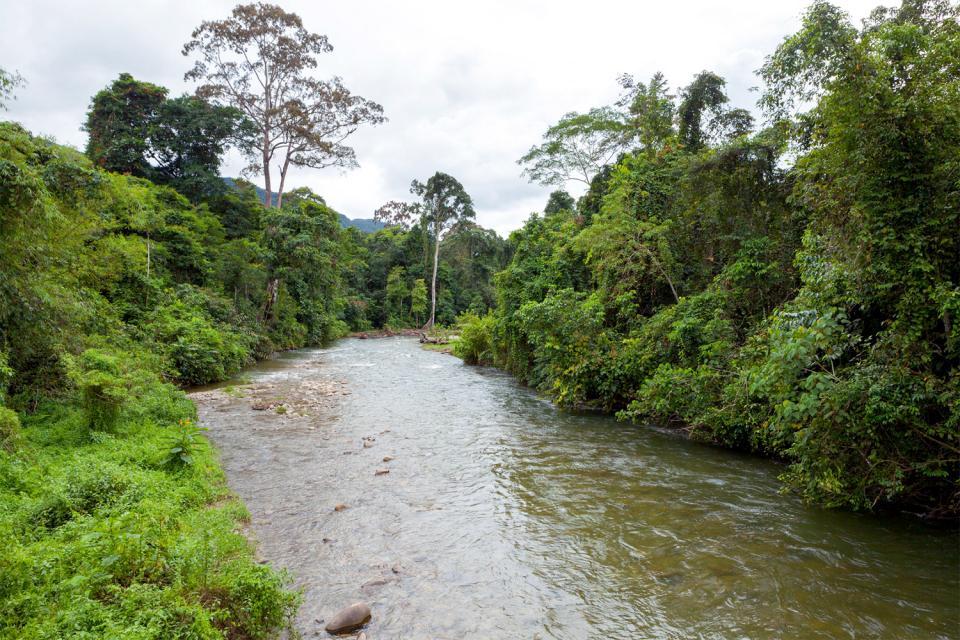 Le parc national de Gunung Mulu (Bornéo) , Malaisie