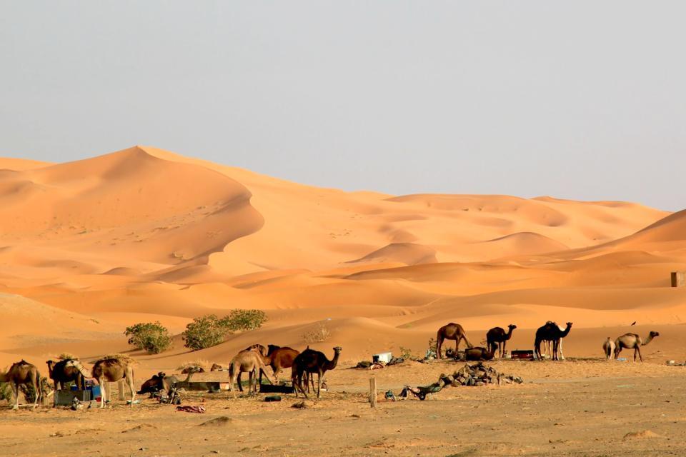 Les dunes de Merzouga , Maroc