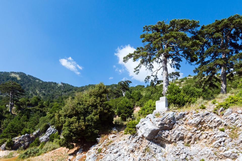 Die Flora , Die Mittelmeerküste, Albanien , Albanien