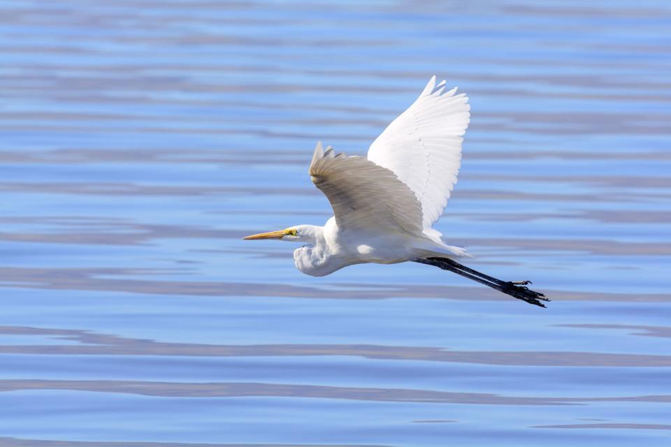 Heron Island , Australie