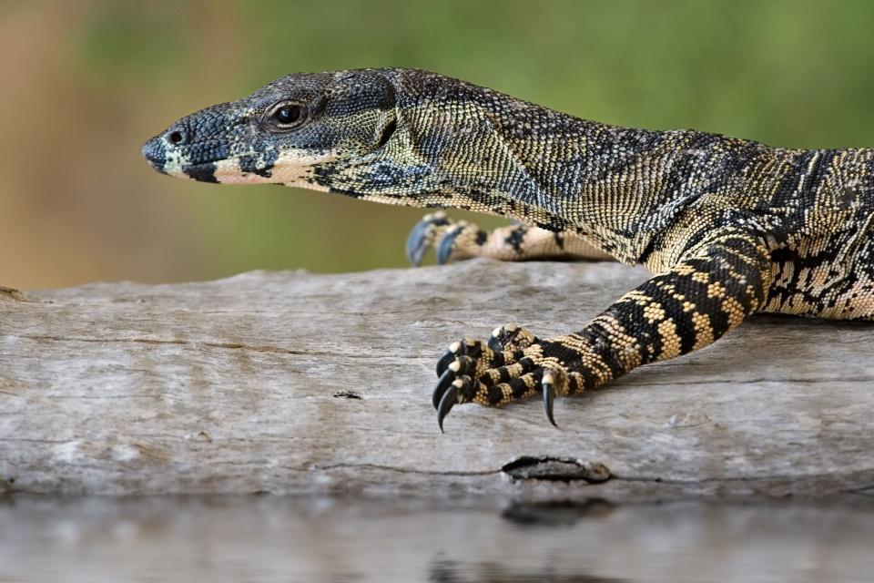 Lizard Island , Australie