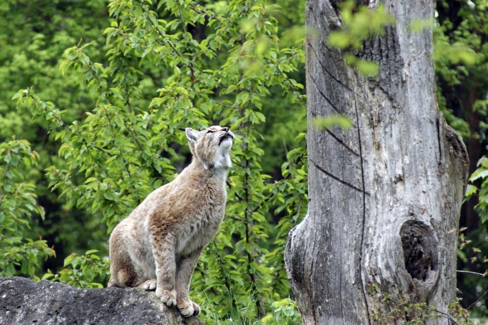 La faune albanie for Attraction 78