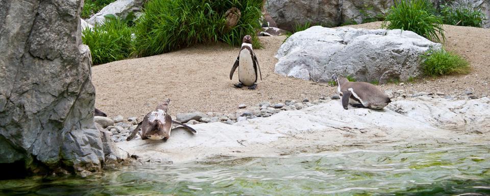 Le jardin zoologique de sch nbrunn autriche for Le jardin zoologique