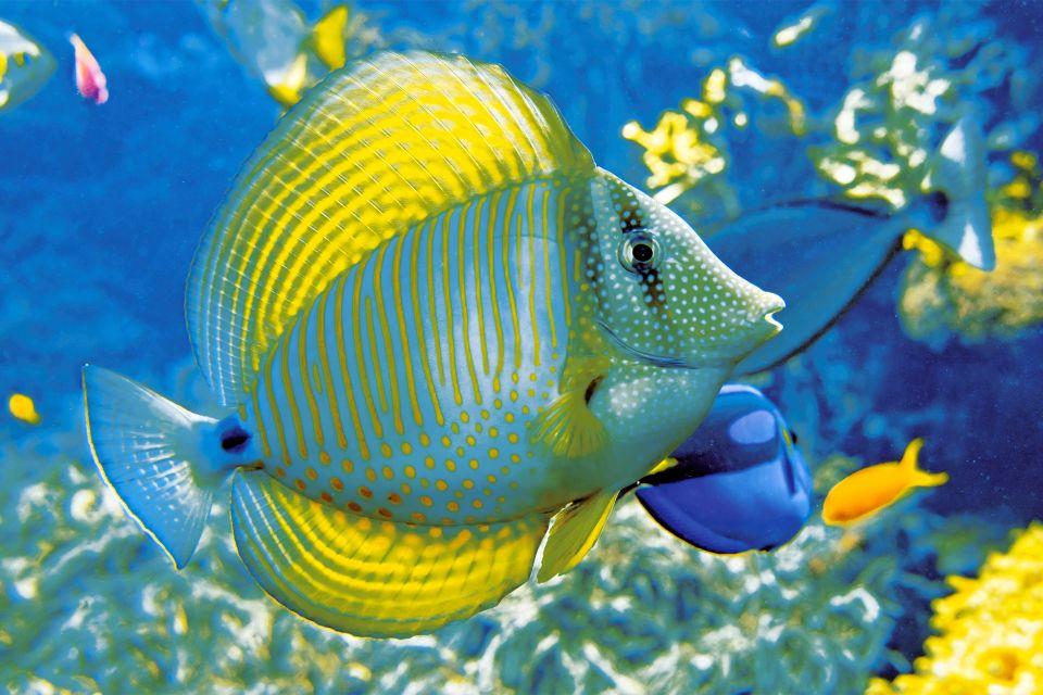 Les activités et les loisirs, Jardin, zoologique, Schonbrunn, zoo, vienne, autriche, europe, faune, animal, poisson