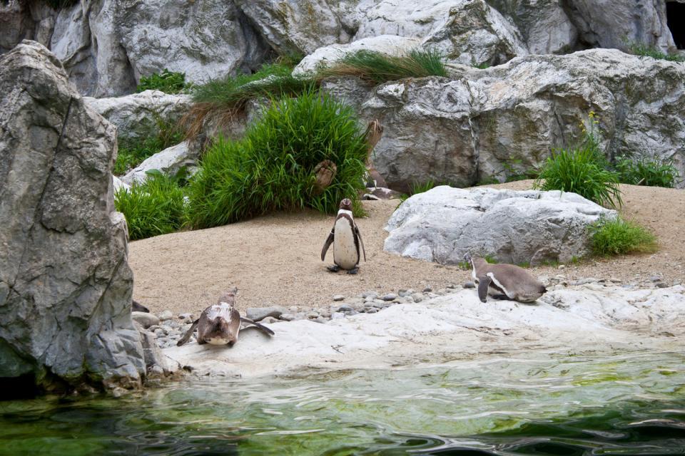 Le jardin zoologique de Schönbrunn , Autriche