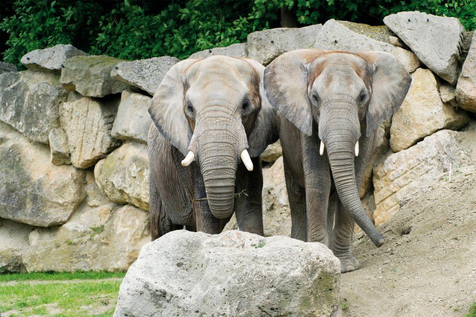 Les activités et les loisirs, Jardin, zoologique, Schonbrunn, zoo, vienne, autriche, europe, faune, animal, pachyderme, éléphant