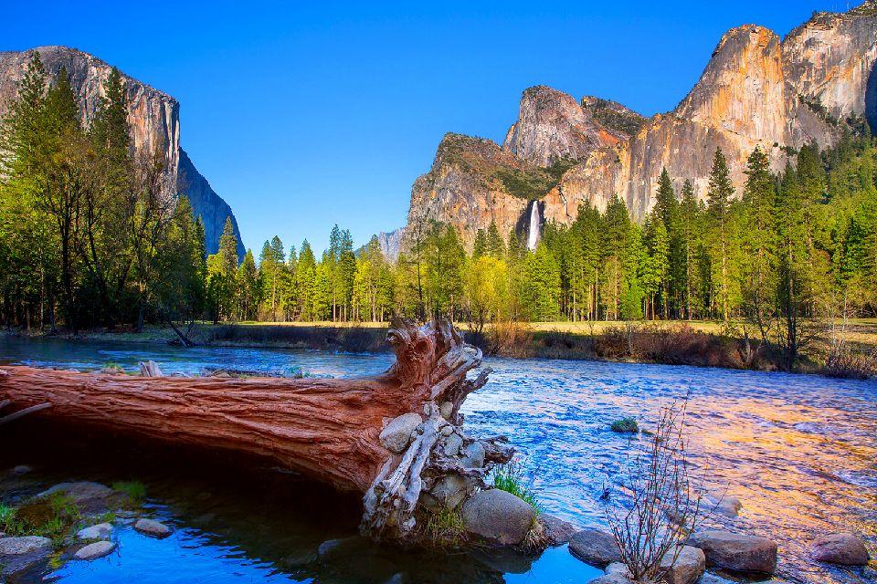 Le parc national de Yosemite , Une faune et une flore diversifiées , Etats-Unis