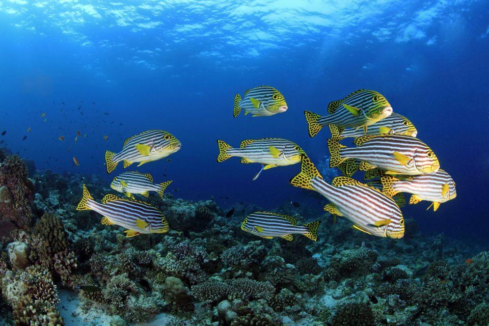 Les côtes, île, Maldives, Malé Nord, atoll, asie, plage, océan indien, gaterin, poisson