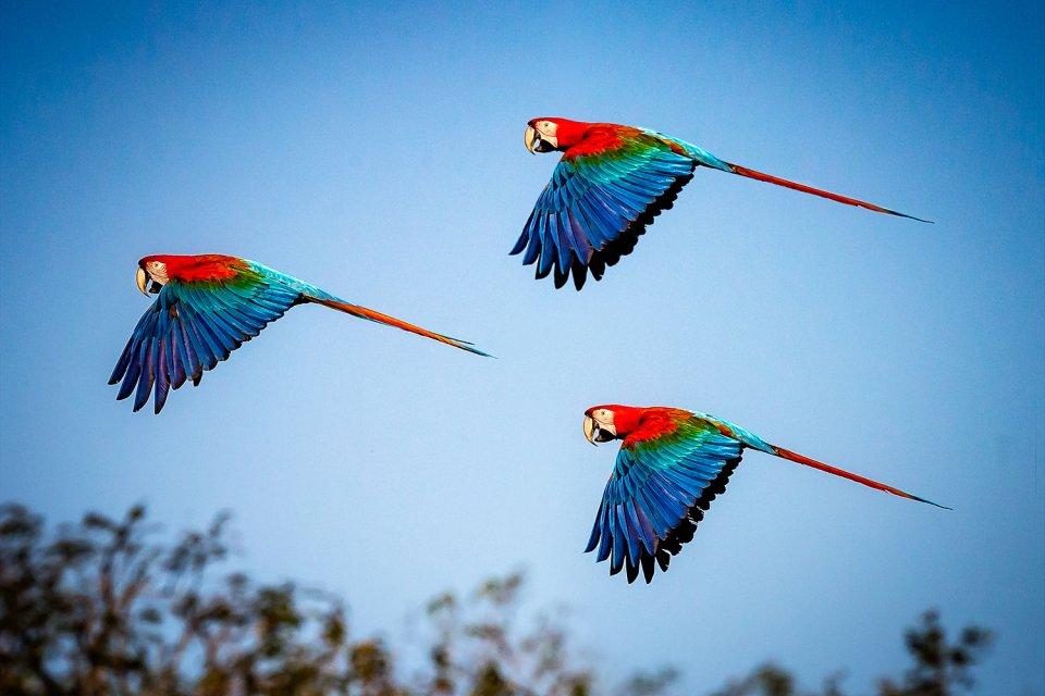 El río Sarapiqui, Los paisajes, Costa Rica