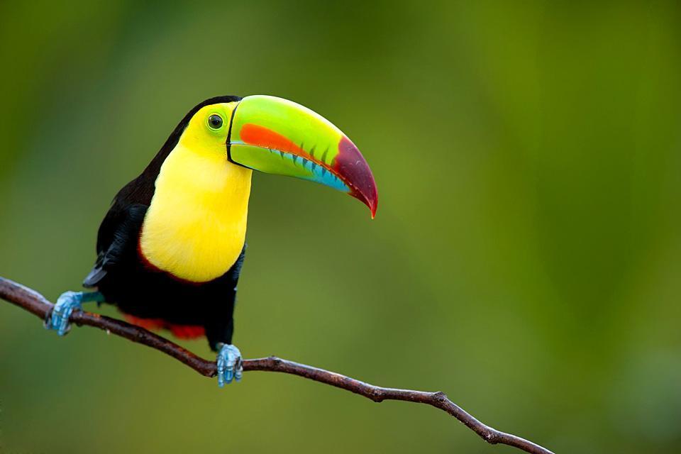 La riserva di Carara , Costa Rica
