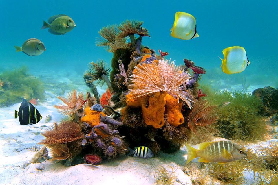 La fauna sottomarina dell'isola di Coco, La fauna e la flora, L'isola dei tesori, Costa Rica