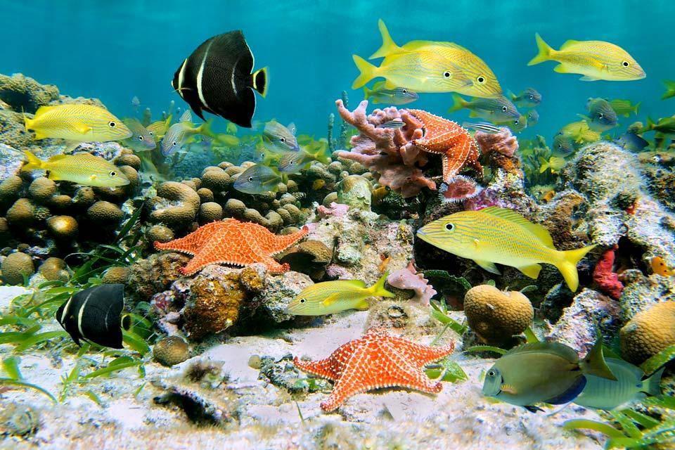 La fauna sottomarina dell'isola di Coco , La fauna sottomarina delle isole Cocos , Costa Rica