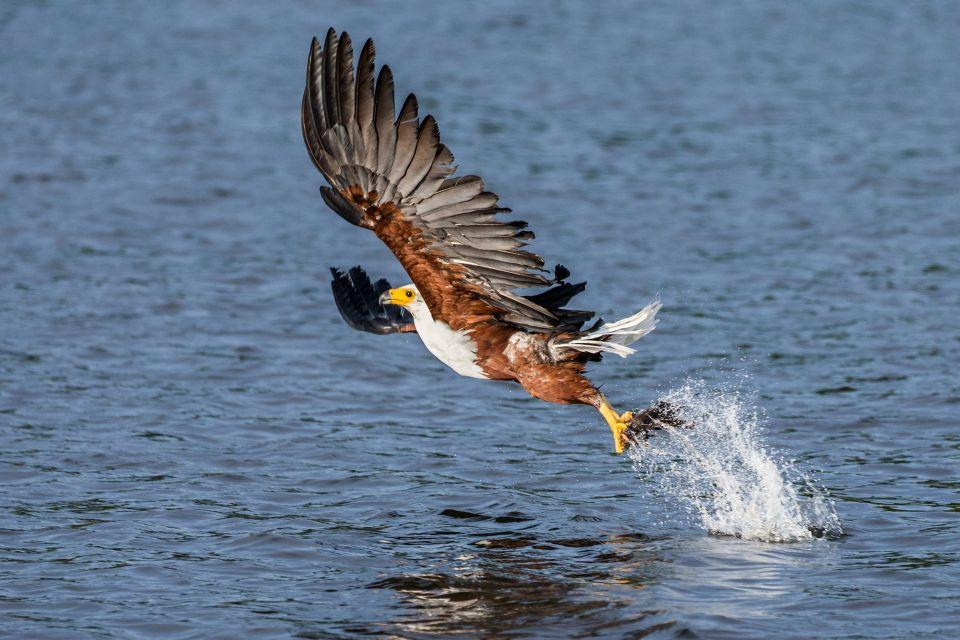 Les paysages, nature, faune, animal, oiseau, aigle, poisson, sénégal, afrique, lac, guiers, rapace