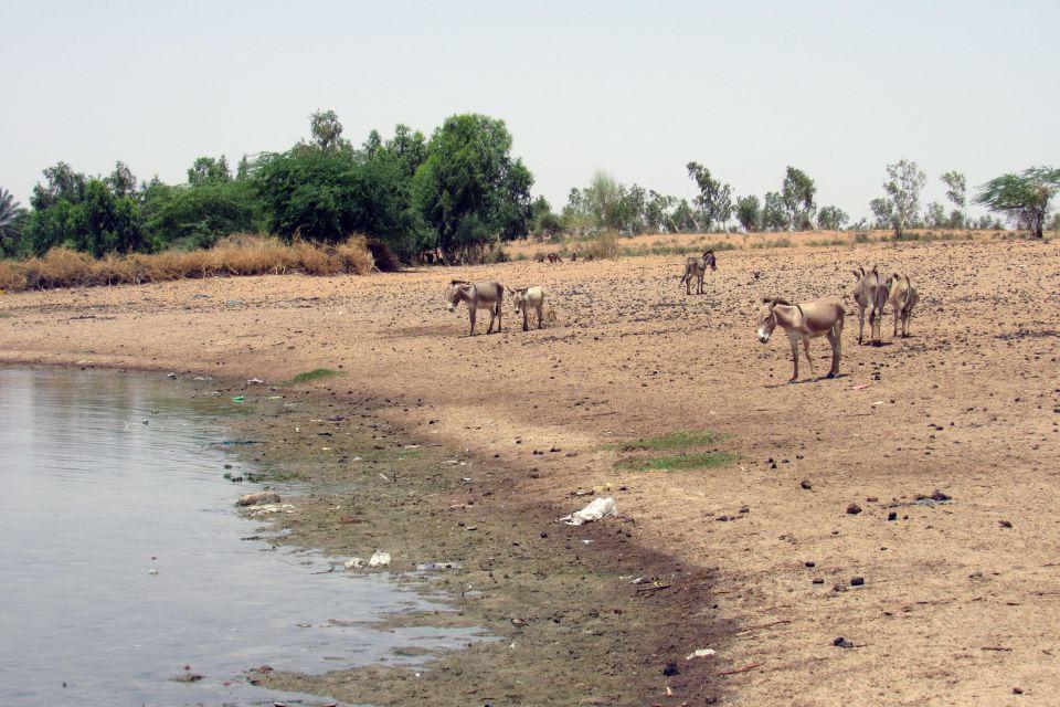 Les paysages, nature, faune, animal, sénégal, afrique, lac, guiers, âne, mammifères