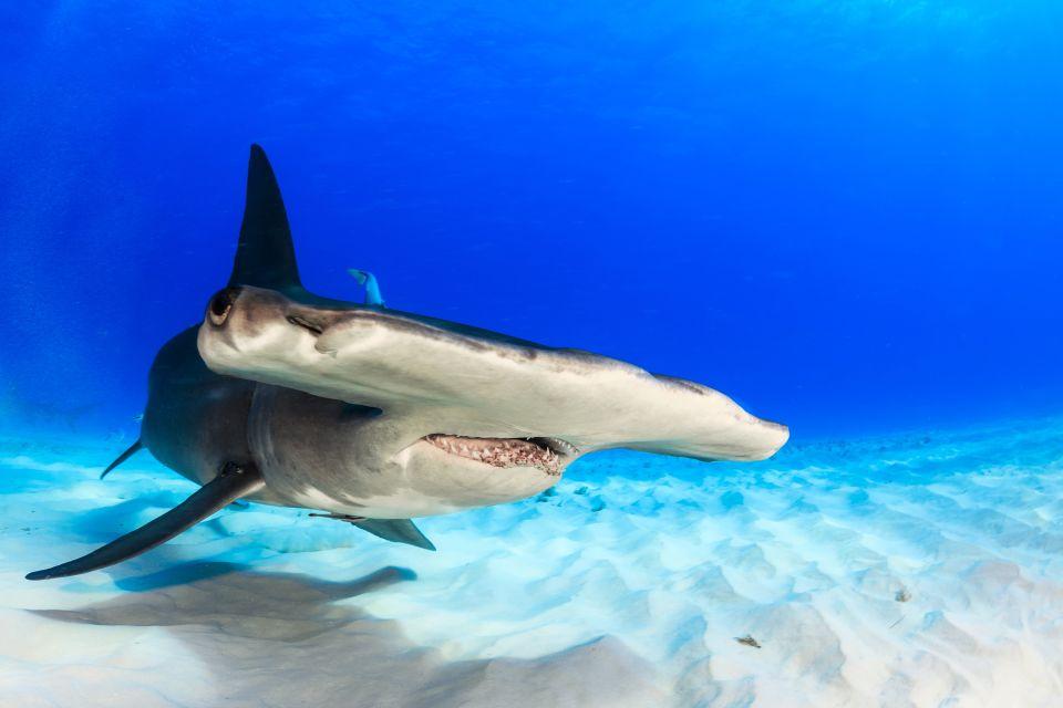Les parcs et les réserves, sénégal, afrique, langue, barbarie, sable, faune, animal, nature, requin, poisson, requin-marteau