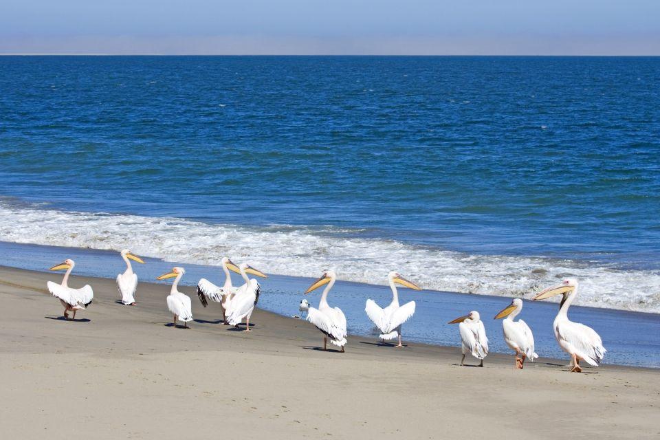 Les parcs et les réserves, sénégal, afrique, langue, barbarie, sable, faune, animal, nature, oiseau, pélican