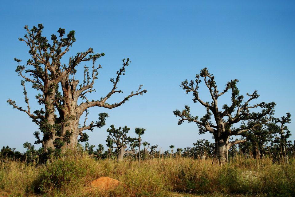Les parcs et les réserves, ferlo, nord, sénégal, afrique, réserve, parc, nature, flore, végétation, plante, arbre, baobab