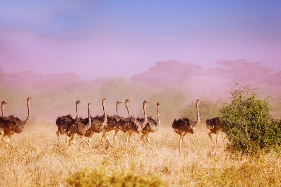 Les parcs et les réserves, ferlo, nord, sénégal, afrique, réserve, parc, nature, autruche