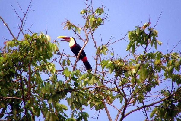 Il Parco Nazionale di Tortuguero , Costa Rica