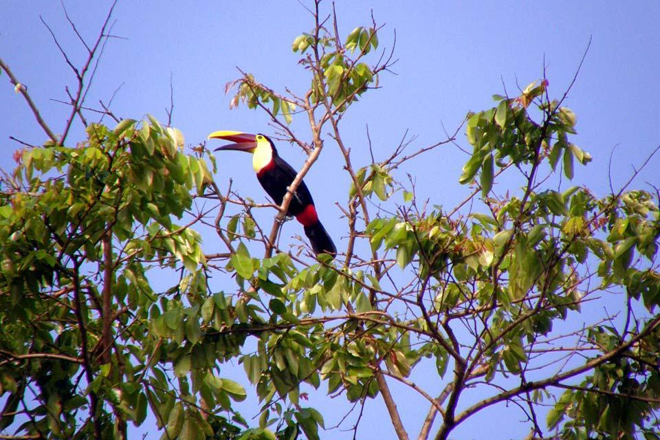 National Park of Tortuguero , Costa Rica