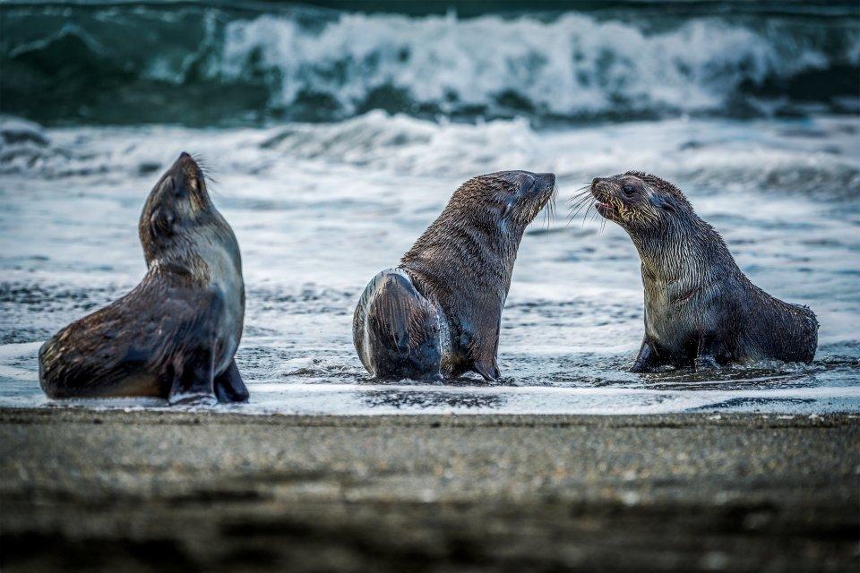 Les paysages, Antarctique, kerguelen, france, nouvelle-calédonie, otarie, animal, faune, mammifère