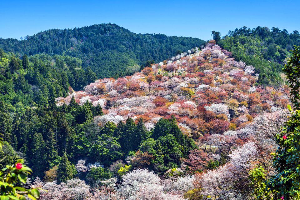 Le Mont Yoshino , Japon