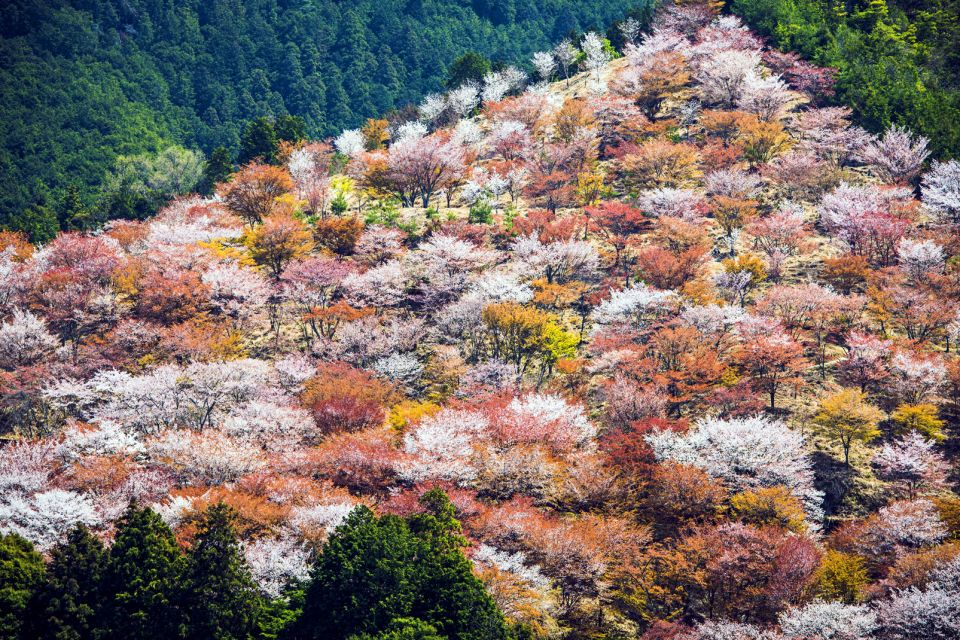 Le Mont Yoshino , Traditions ancestrales , Japon