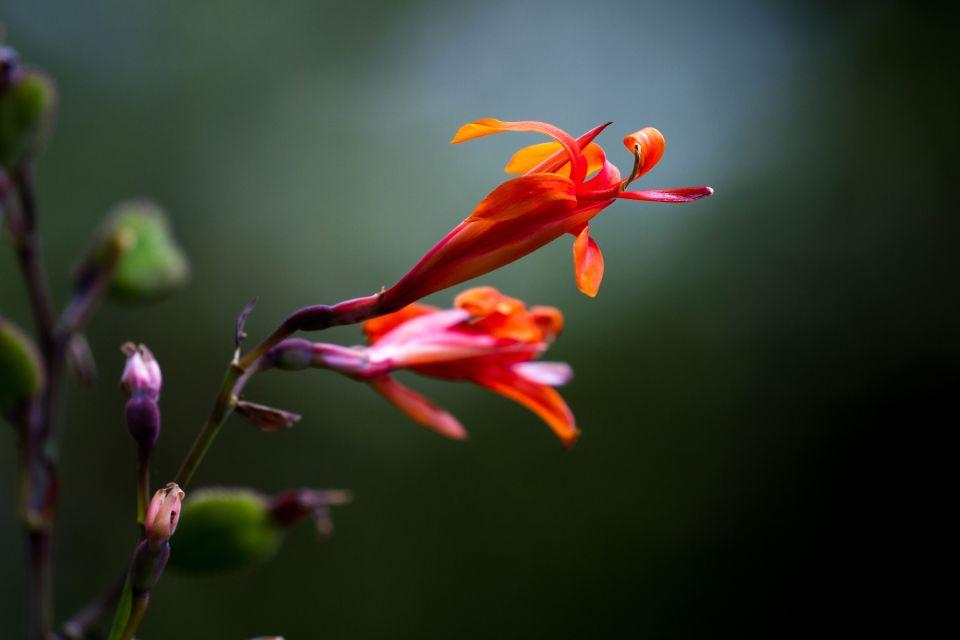 La Matina flower farm, The fauna and flora, Costa Rica