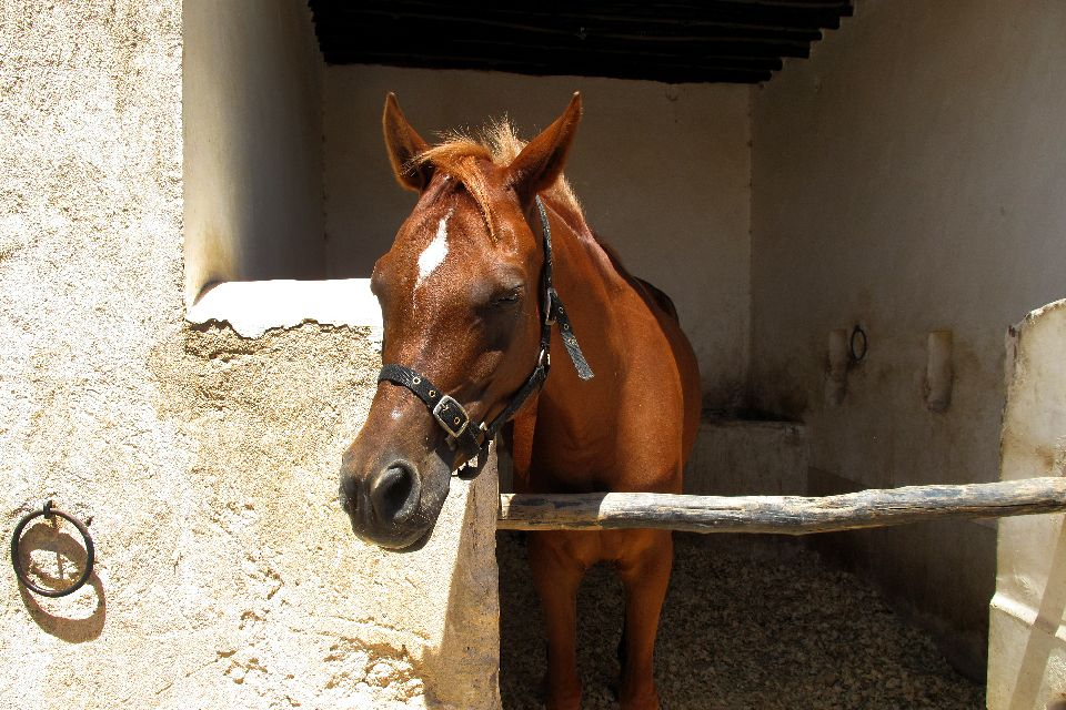 Le centre équestre Al Shaqab , Qatar