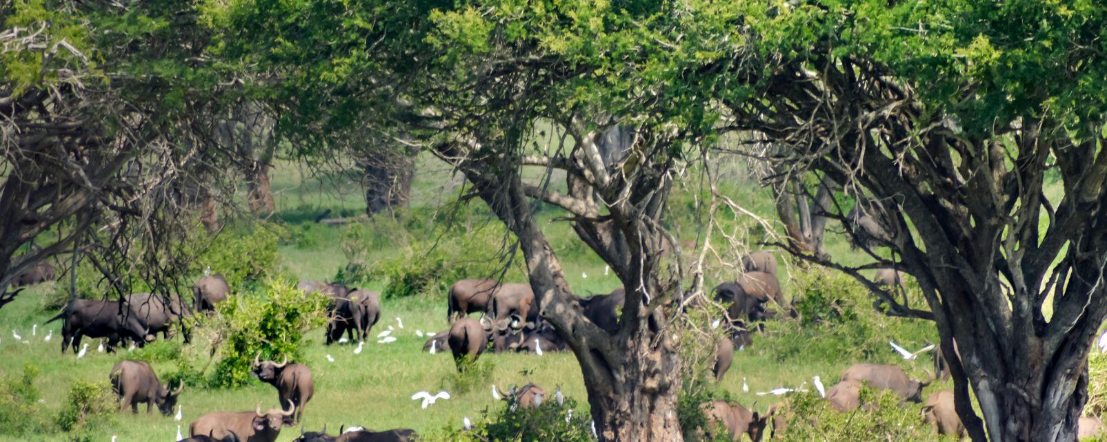 Parques Nacionales de Tai y del Monte Péko, Los Parques Nacionales de Tai y del Monte Peko, Fauna y flora, Costa de Marfil