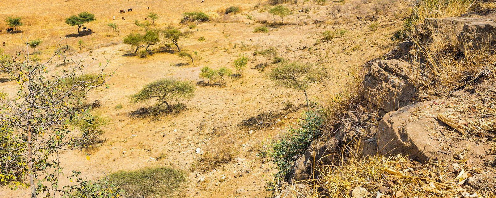Le massif du Gheralta , Ethiopie