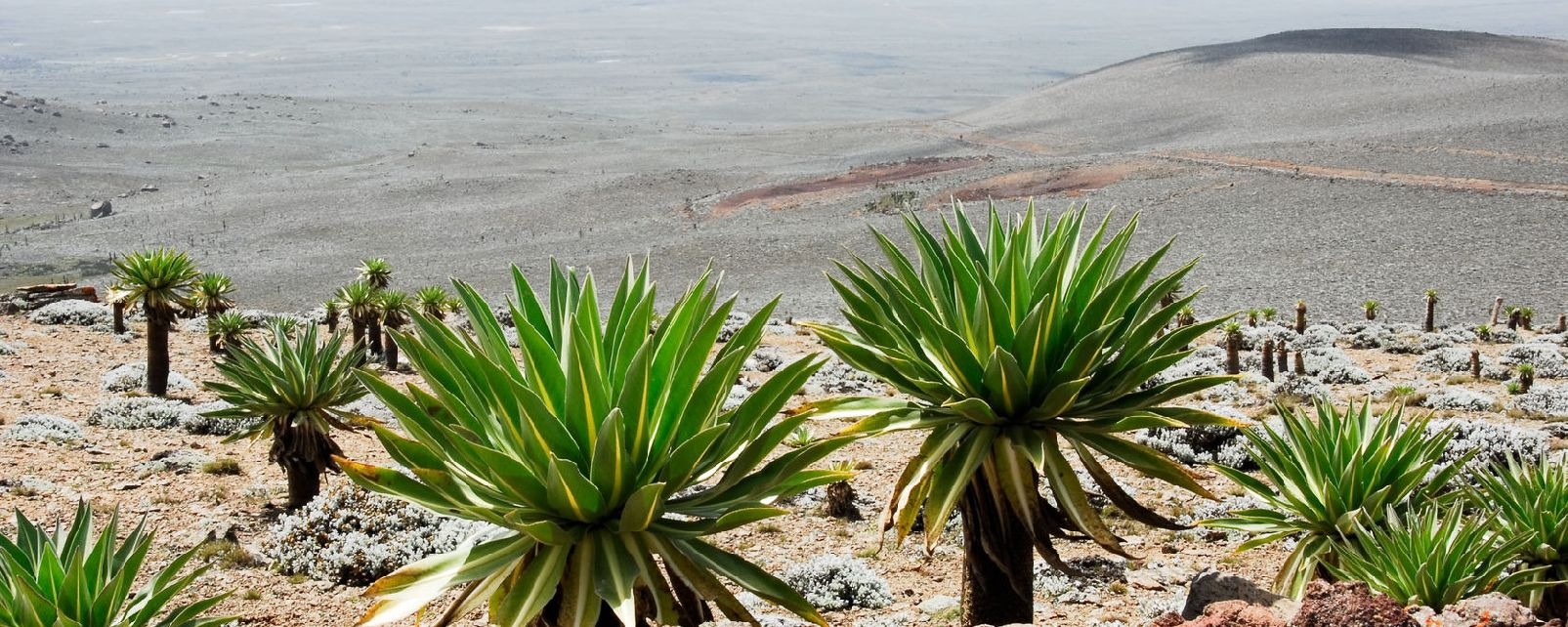 Le massif du Bale , Ethiopie