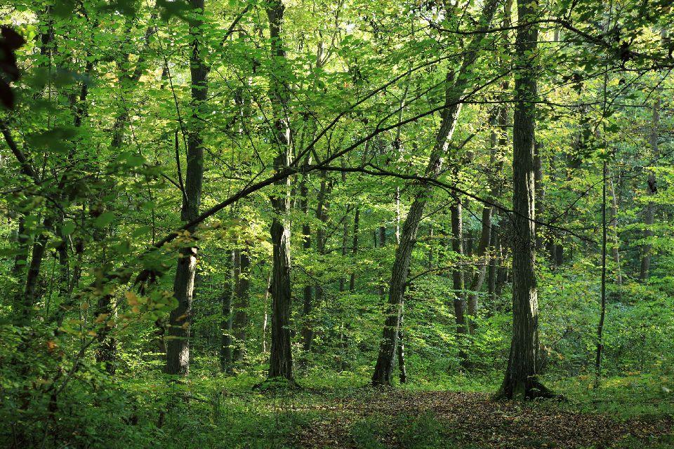 Le Parc national du Hainich , Allemagne