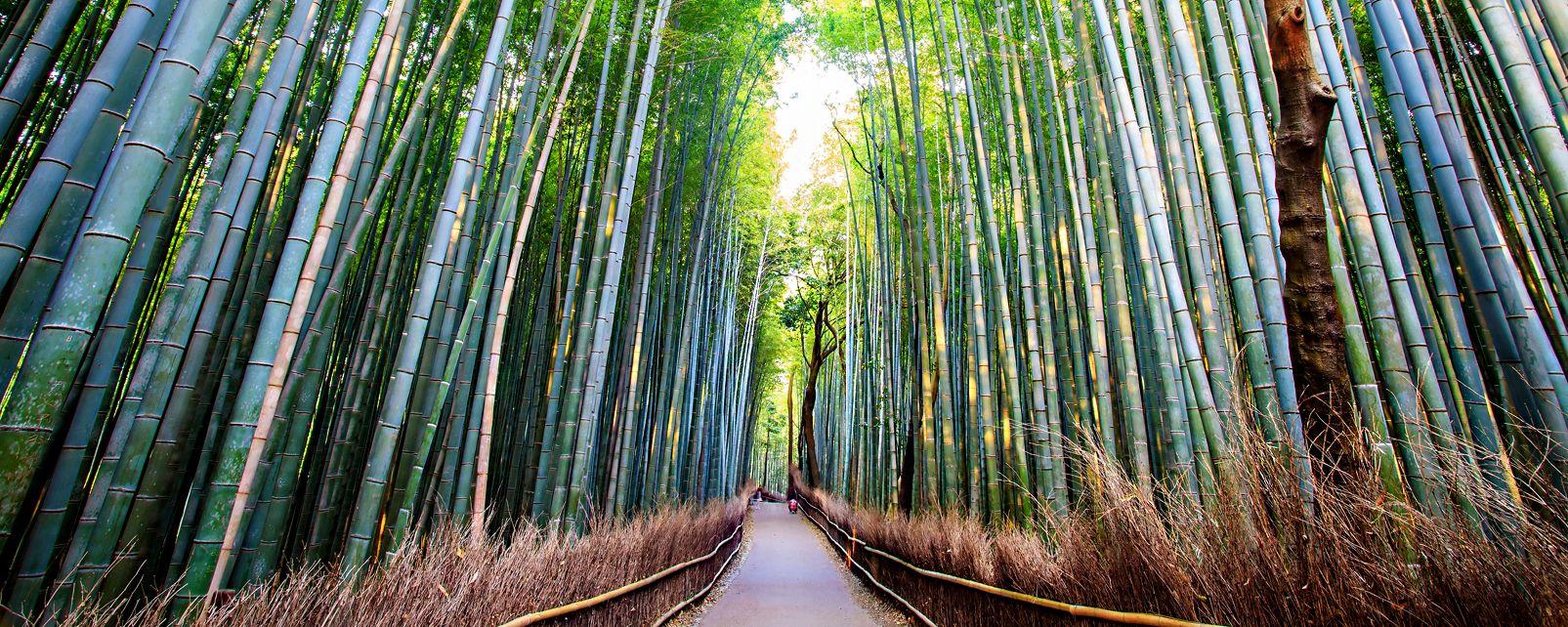 La bambouseraie d'Arashiyama à Kyoto , Japon