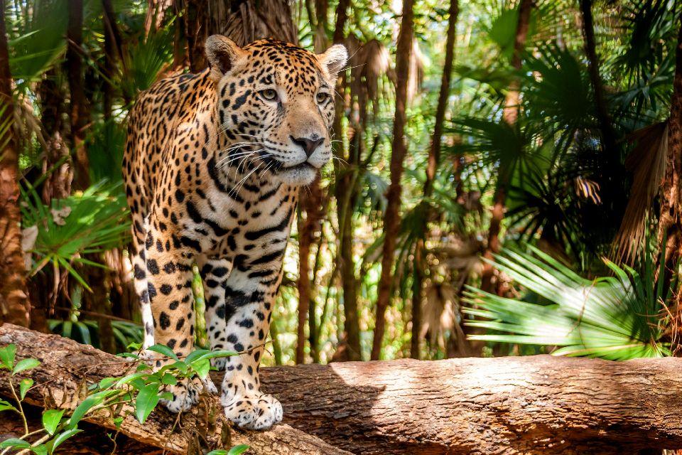 Les réserves de la forêt Atlantique , Brésil