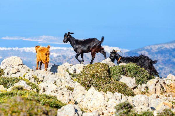 Kri-Kri auf Kreta, Trekking-Strecken, Die Landschaften, Kreta