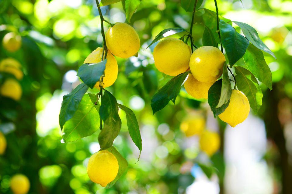 Les arbres fruitiers en Crète, Les plaines fertiles, Les paysages, Crète