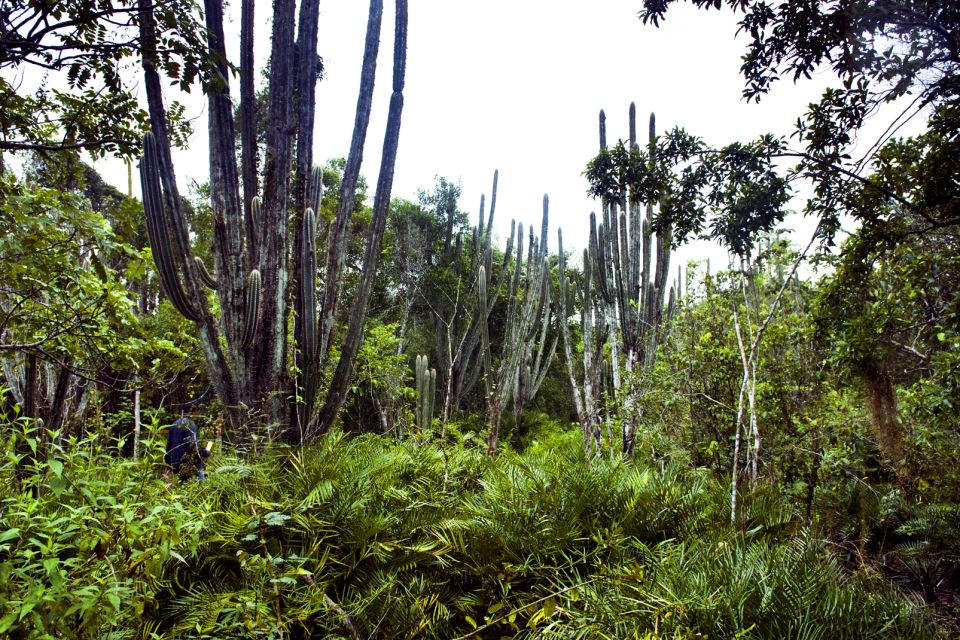 Les paysages, Parc national de l'Este Bayahibe République Dominicaine Caraïbes flore cactus
