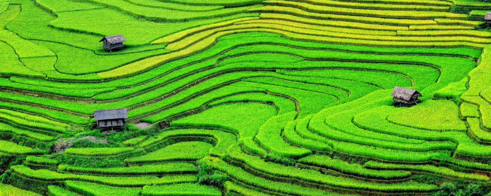 Les rizières de Sapa , Vietnam
