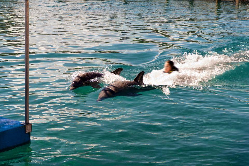 Les activités et les loisirs, Ocean World Puerto Plata République Dominicaine Caraïbes dauphin
