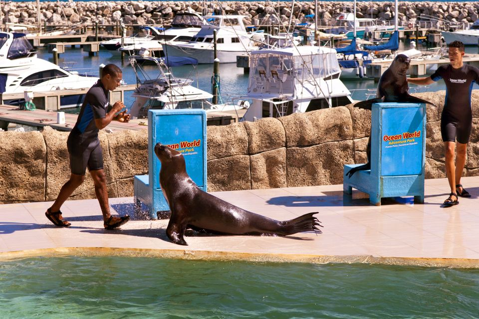 Les activités et les loisirs, Ocean World Puerto Plata République Dominicaine Caraïbes phoques
