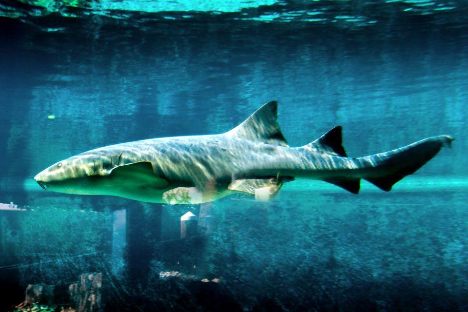 Les activités et les loisirs, Ocean World Puerto Plata République Dominicaine Caraïbes requin