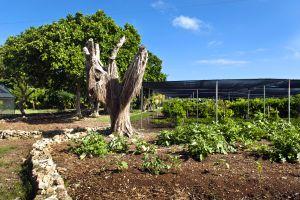 Les activités et les loisirs, Fondation écologique Punta Cana République Dominicaine Caraïbes verdure