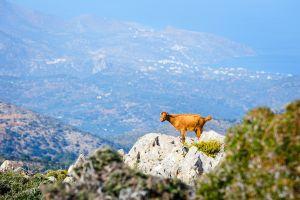 Fauna , La fauna , Grecia