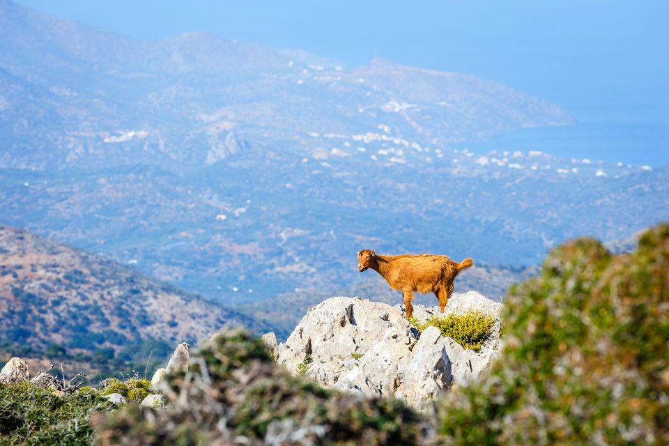 La faune, La faune et la flore, Crète
