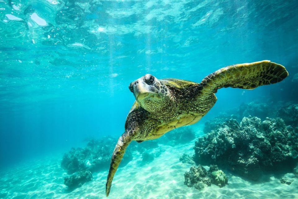 Fauna und Flora, Die Tierwelt, Die Fauna und Flora, Kreta