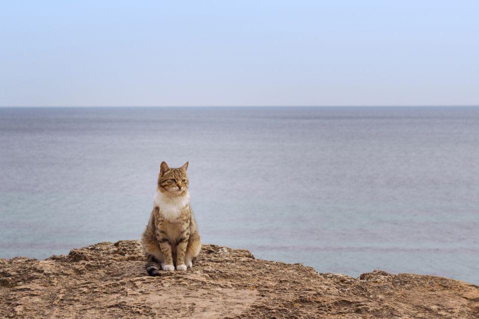 La faune et la flore, crète, europe, grèce, méditerranée, chat, félin, mammifère, faune, animal, mer