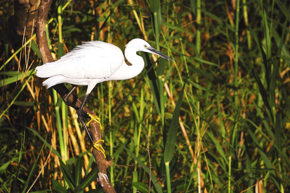 Vögel auf Kreta, Die Tierwelt, Die Fauna und Flora, Kreta