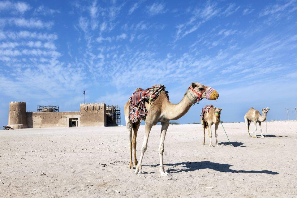 zubarah, site al zubarah, qatar, moyen-orient, ruine, vestige, fort, chameaux, Al Zurabah
