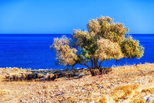 Frische Natur, Die Pflanzenwelt, Die Fauna und Flora, Kreta